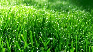 Groen-gras-achtergronden-hd-gras-wallpapers-afbeeldingen-plaatjes-08
